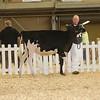 AllAmerican17_Holstein_IMG_2388