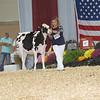 AllAmerican17_Holstein_IMG_2366
