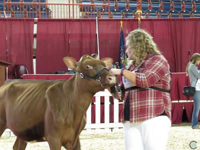All-American Milking Shorthorn 2017