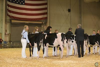 All-American PA Holstein Heifers 2017
