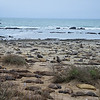 Elephant Seals beach