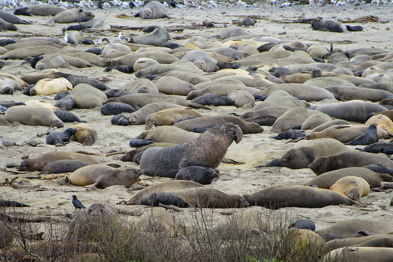 Among the seals