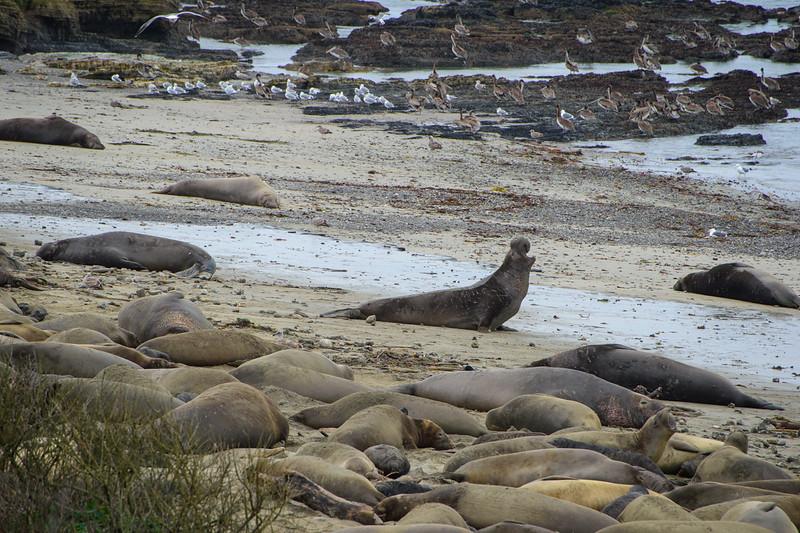 Seals and birds