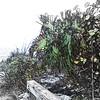 Lido Beach April '17 01