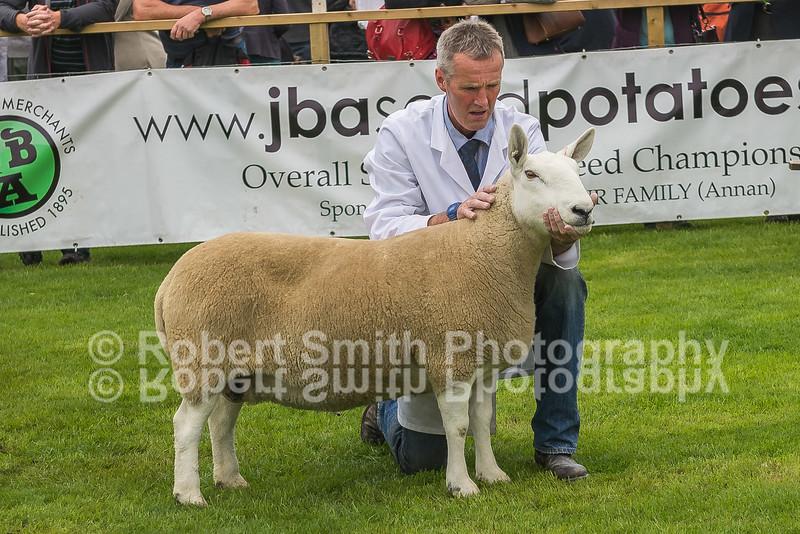 Overall Champion (Park)- Aged Ewe - J Runciman, Allanshaws
