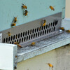 MET 032717 BEE HIVE