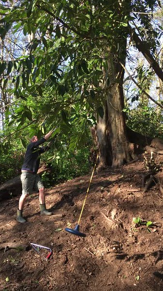 Peter has cleared a hillside in the ravine and is chopping branches to hang the Mother of All Backyard Swings (MOABS).