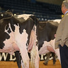Alantic17_Holstein_IMG_0869