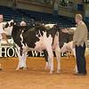 Alantic17_Holstein_IMG_0871
