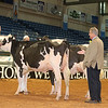 Alantic17_Holstein_IMG_0868