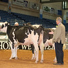 Alantic17_Holstein_IMG_0875