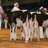 Atlantic17_Holstein_AIMG_9830