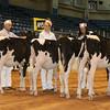 Atlantic17_Holstein_AIMG_9836