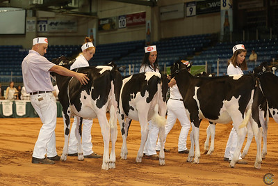 Atlantic Summer HOlstein Show 2017