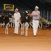 Atlantic17_Holstein_AIMG_9840