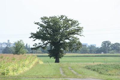 MY tree....