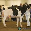 BCSpring17_Holstein_1M9A9452