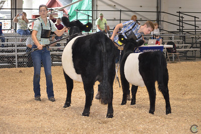 Big E Belted Galloway Show 2017