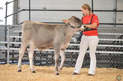 Northeast National Brown Swiss Heifer Show 2017
