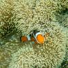 I even found Nemo.