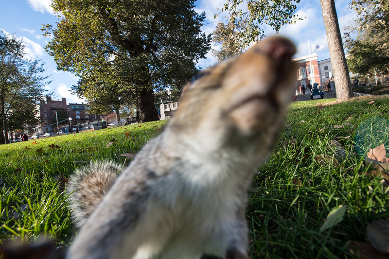 Early failed attempt at getting a squirrel and the State House.