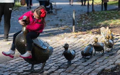 Make Way for Ducklings in Boston Public Garden.