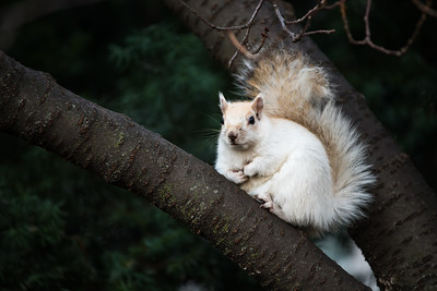 Rare white squirrel near the Washington statue.