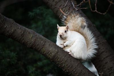 Rare white squirrel near the Washington statue.