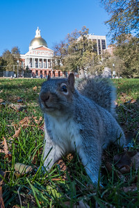 Squirrel and the State House.
