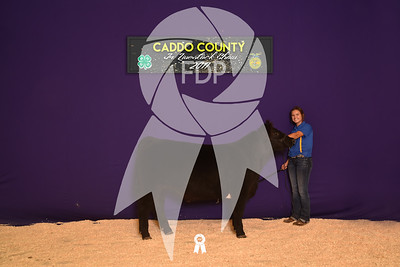 DO17-Caddo-5932