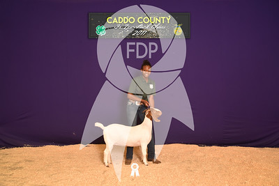 DO17-Caddo-5884