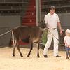 CalgarySpring17_Holstein_1M9A1435