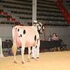 CalgarySpring17_Holstein_IMG_7946