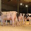 CalgarySpring17_Holstein_IMG_7991