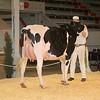 CalgarySpring17_Holstein_IMG_7948