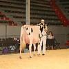 CalgarySpring17_Holstein_IMG_7949