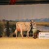 CalgarySpring17_Holstein_IMG_7950