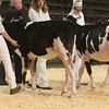 CalgarySpring17_Holstein_1M9A1193