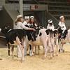 CalgarySpring17_Holstein_1M9A1196