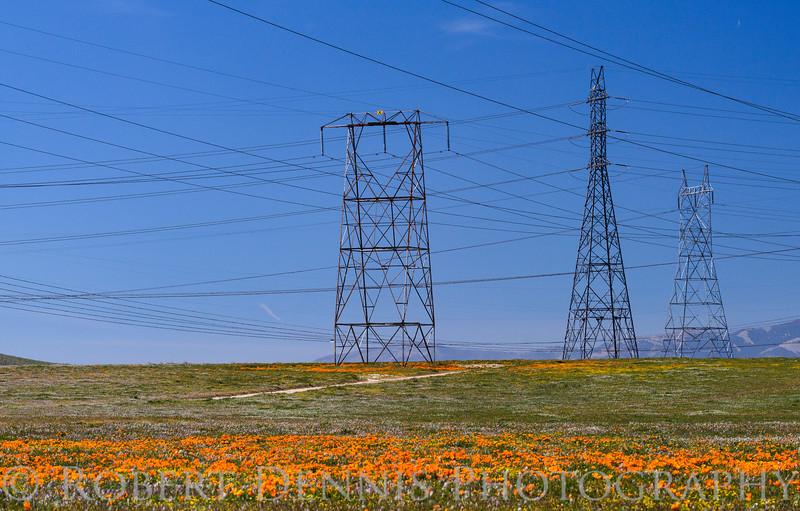 Poppys in the Antelope Valley