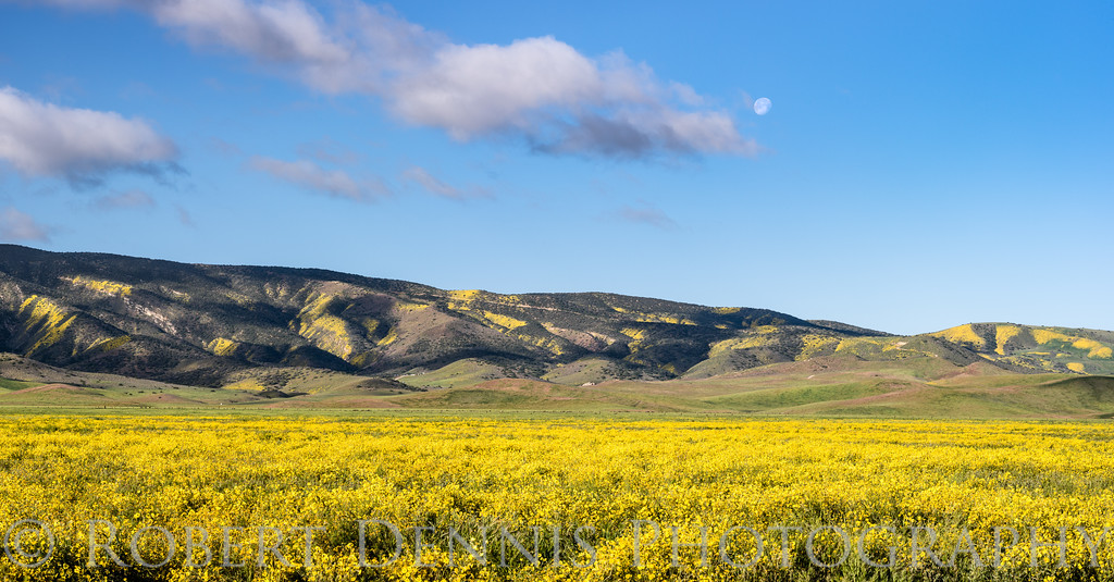 Carrizo Plain excursion