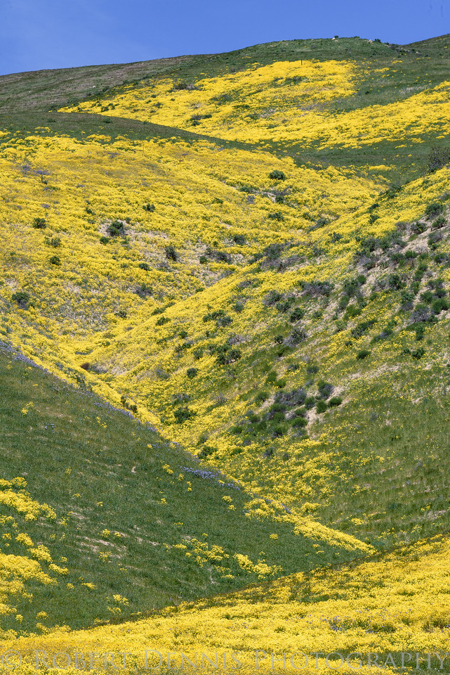 Carrizo Plain excursion