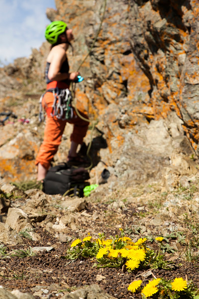 Hailey works the belay among the flowers and sheep droppings high over the Seward Highway.