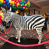 A zebra created from Lego's was on display as Merlin Entertainment officially announced that LEGOLAND New York is being built on Wednesday, October 25, 2017. Hudson Valley Press/CHUCK STEWART, JR.