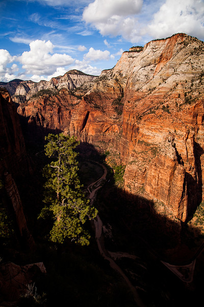 A tree stands out against the shadows of the canyon as they grow into the evening.