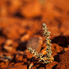 A small plant soaks in the morning sun in the Utah desert.