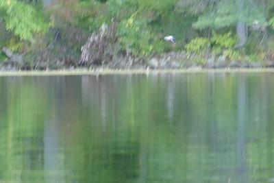 White Oak Pond 10217