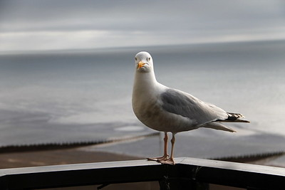 Meet Steve the seagull - our welcoming committee