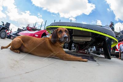 Tyler Bruening's dog