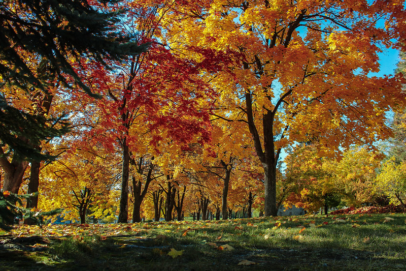 Fall at Minnehaha....